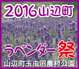 山辺ラベンダー祭2016